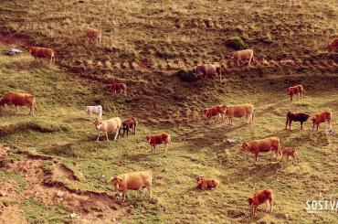 Cantabria-SOSTVAN