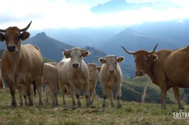 beneficios-medio-ambiente-ganadería-extensiva
