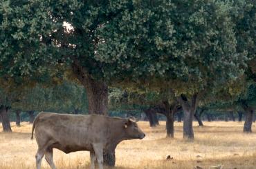 Bienestar animal, alimentación y sanidad